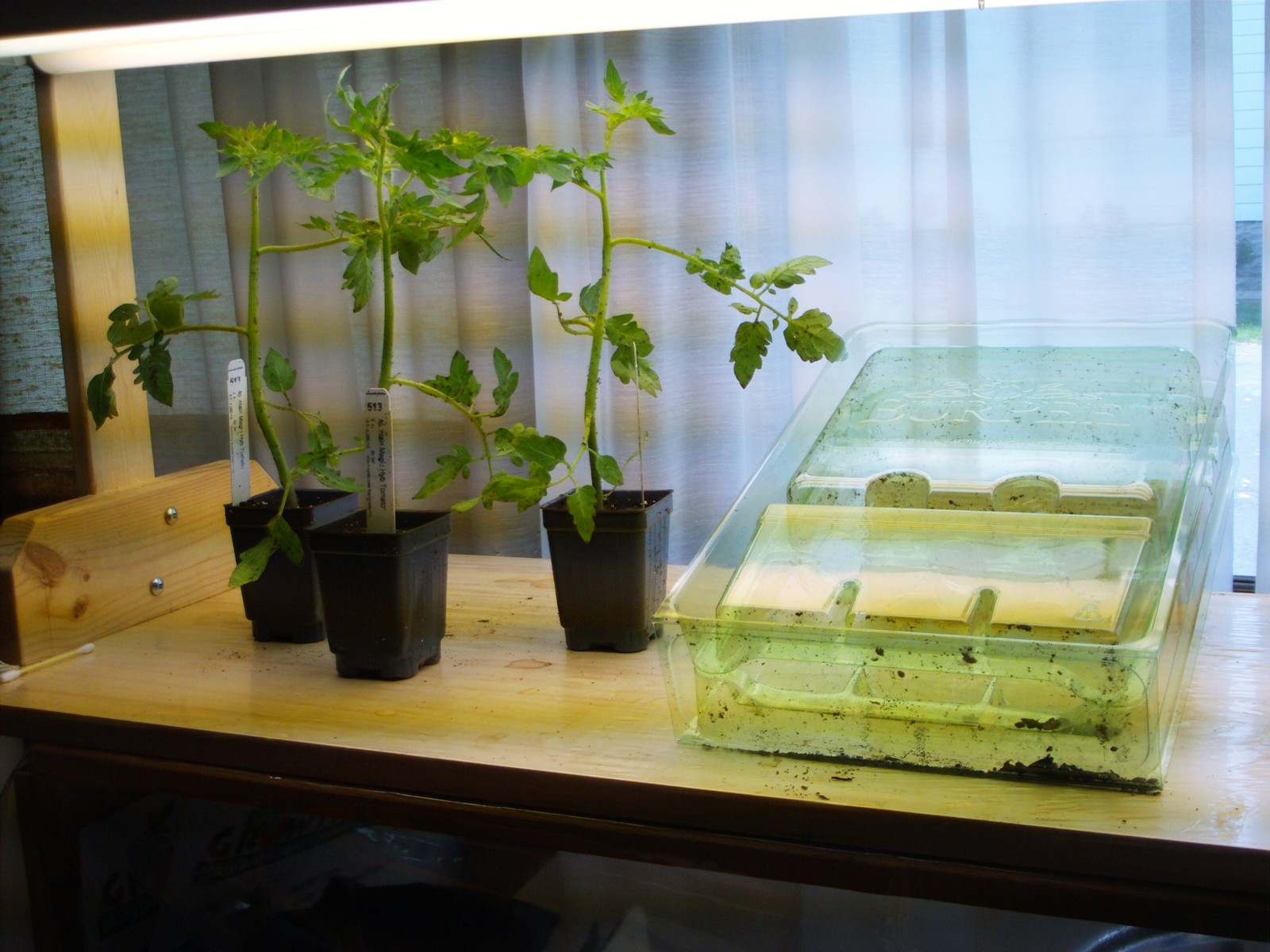 Mail Order Disease Resistant Tomatoes Plants Maryland Grows