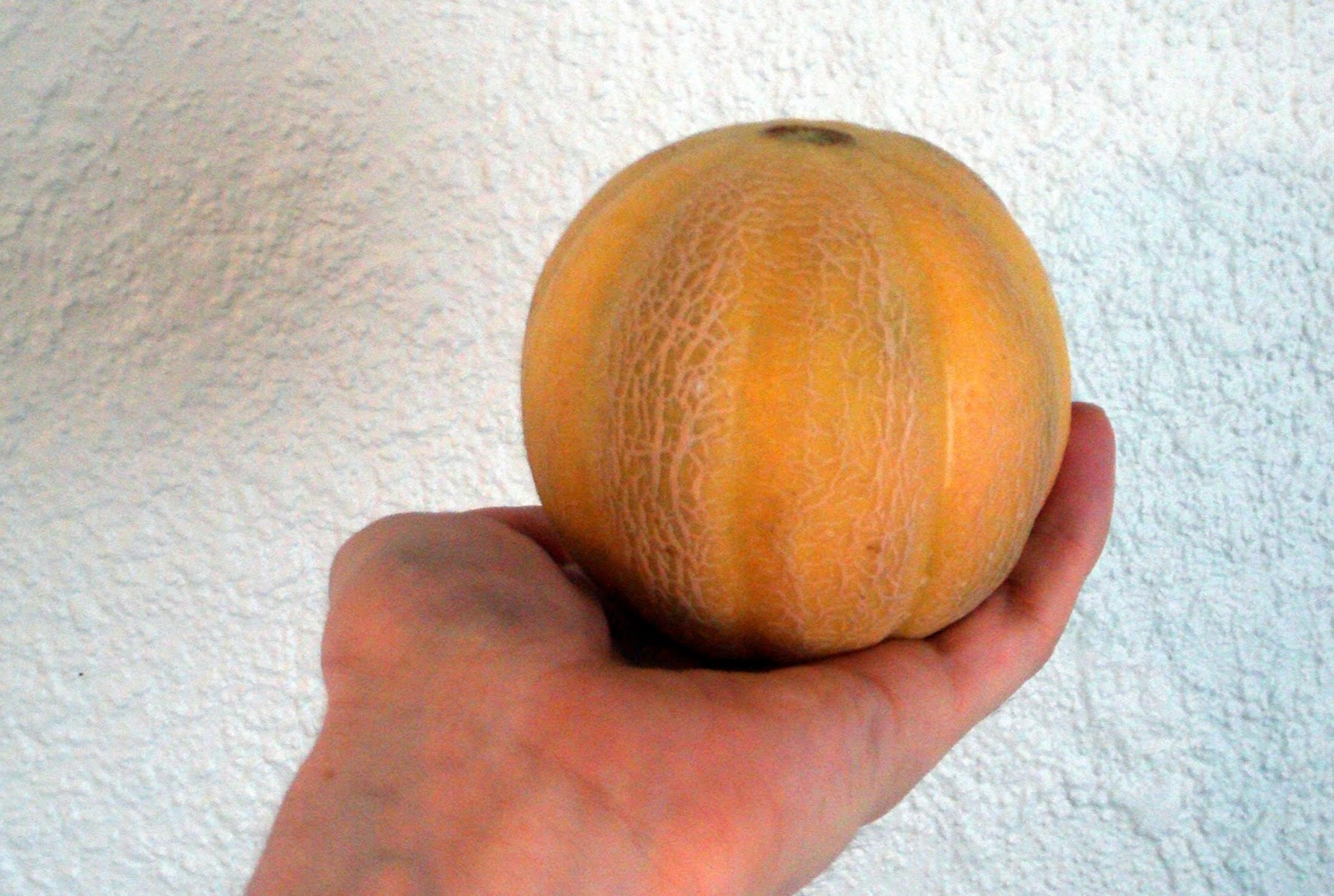 Pint Size Cantaloupe Maryland Grows Sizes runs small , read item description about sizing. pint size cantaloupe maryland grows
