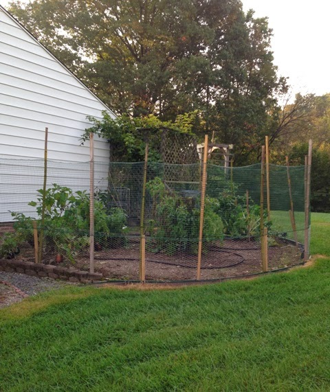 Side Yard Garden With Critter Fence Maryland Grows