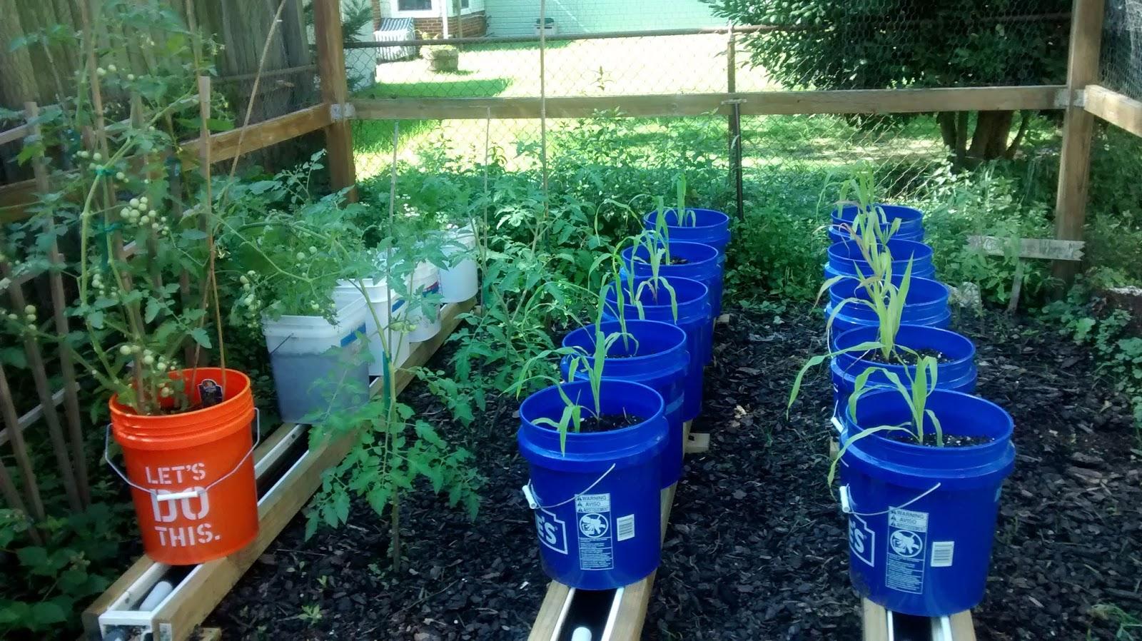 Rain Gutter Grow System Update Maryland Grows