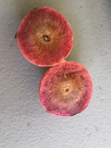 inside an acorn plum gall