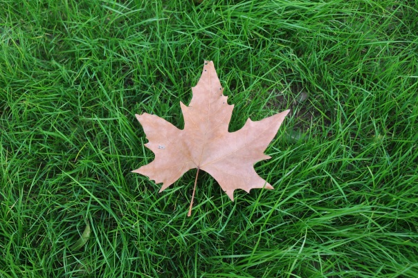 lawn with a fallen leaf
