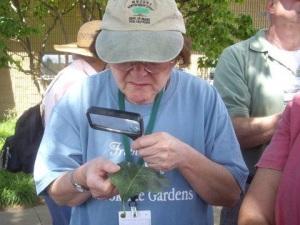 master gardener inspecting a plant leaf