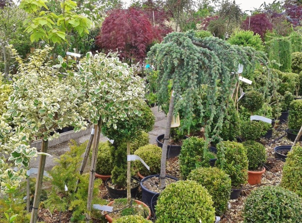 trees and shrubs in a nursery