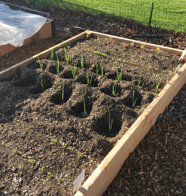 Vegetable Garden Planning What Doesnu2019t Start From Seeds | Maryland Grows