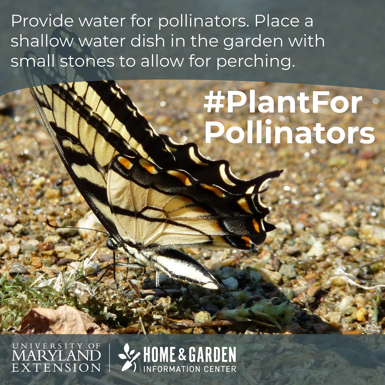 Plant for Pollinators: 9 Ways to Attract and Help Pollinators in ...