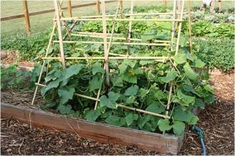 cucumber trellis raised bed