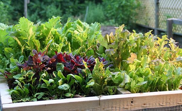 salad table