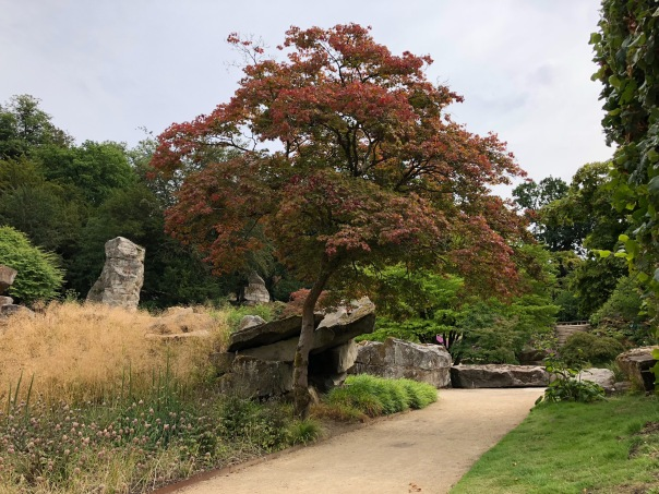 Japanese maple specimen tree