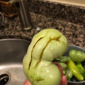TomatoCatfacing2