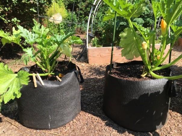 Zucchini in 15-gallon bags