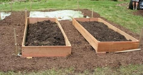 Turf and weeds were smothered and raised beds built on top of the ground without disturbing the soil. It was filled with adjacent soil, compost, and soilless growing media. Plant roots will grow through the raised bed soil into the ground below. Photo credit: Jon Traunfeld