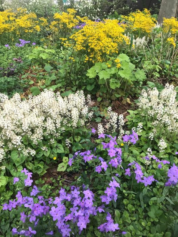 native plants garden