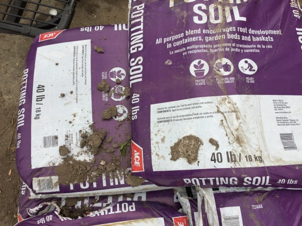 "The label on this bag lists ""aged forest products and perlite"" as the components.  The clods and lack of uniformity suggest it might hinder the growth of container plants. Photo credit: Jon Traunfeld"