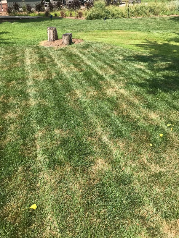 brown patch symptoms in lawn