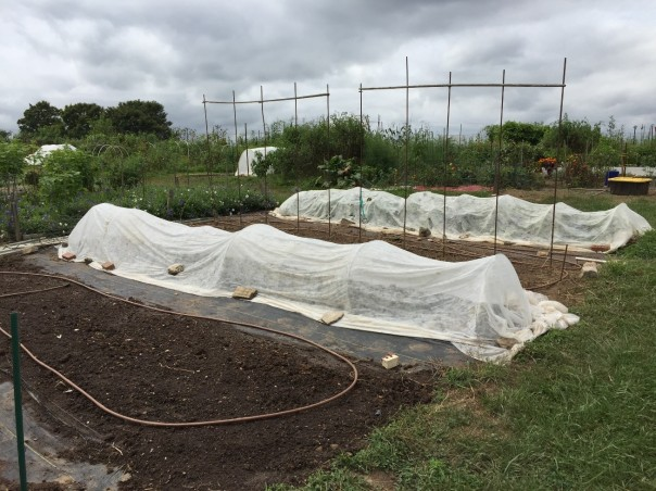 Floating row covers protect fall crops at the Howard Co. Conservancy Community Garden Photo credit: Jon Traunfeld, UME