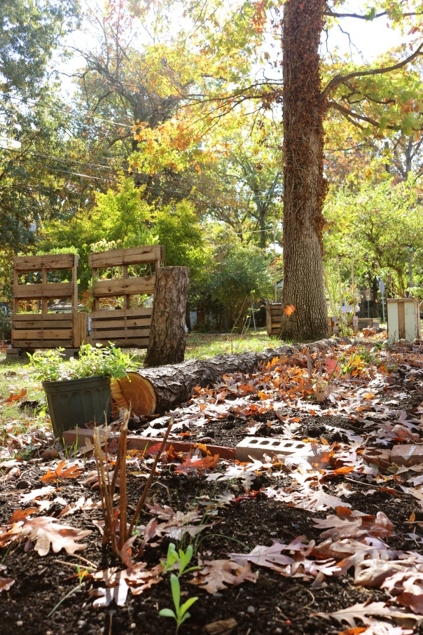 Yard in the fall with leaves on the ground