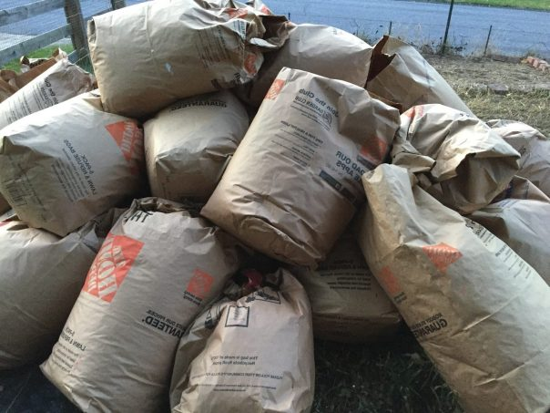 Photo of Bags of leaves around Fig Plant