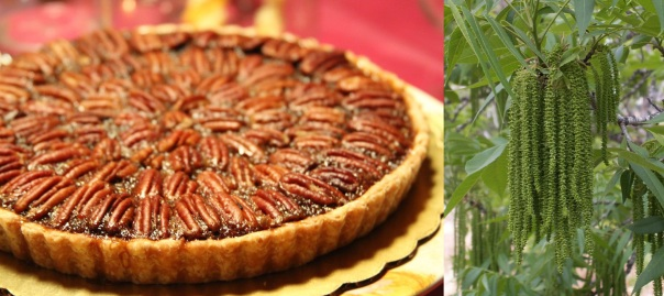 pecan pie and pecan tree flowers