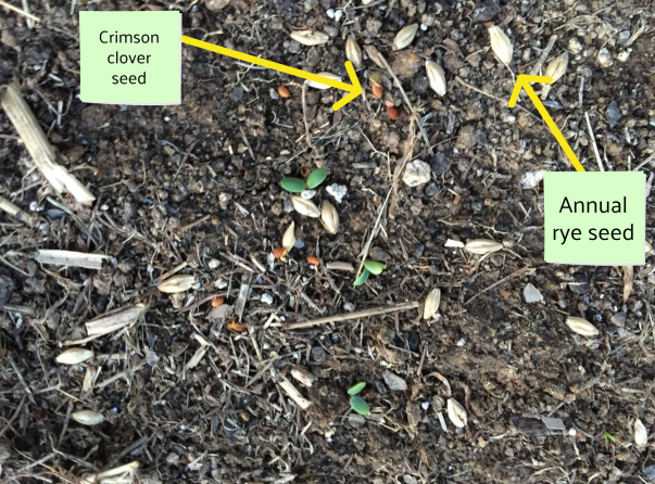 Photo of soil and seeds