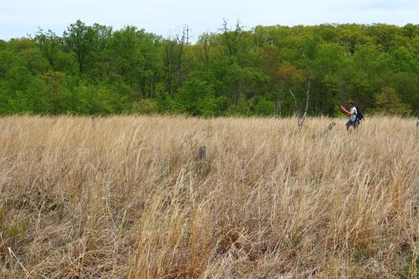 Serpentine Barren Grassland