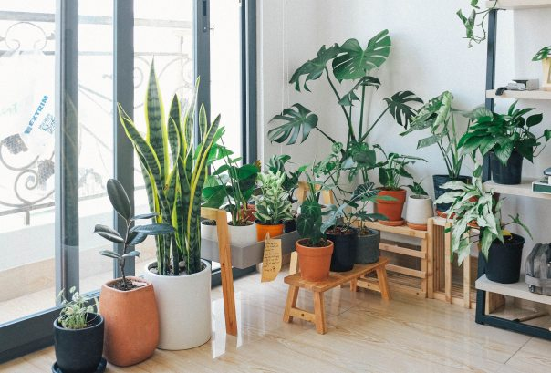 Houseplants by window