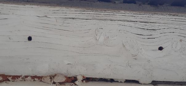 carpenter bee holes in wood