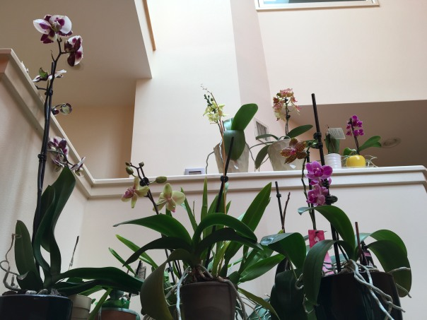 orchids indoors
