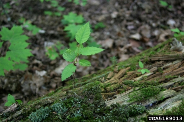 tree seedling growing from an old log