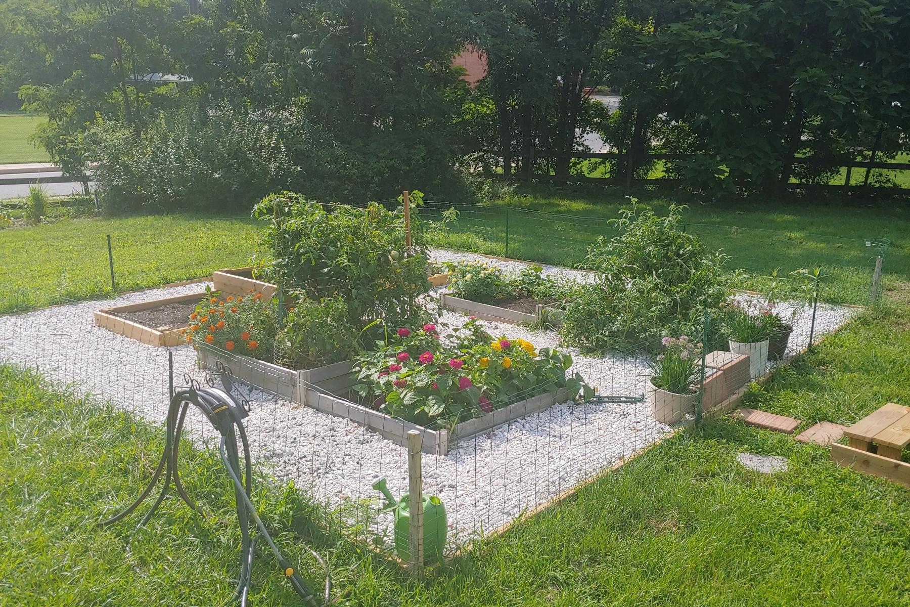Current garden shot