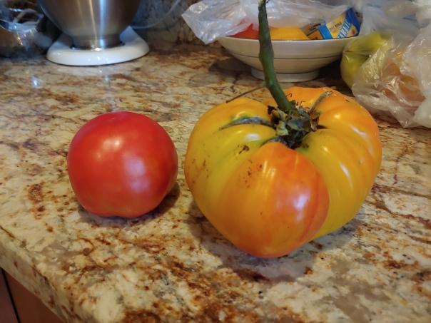 Bulbous tomato