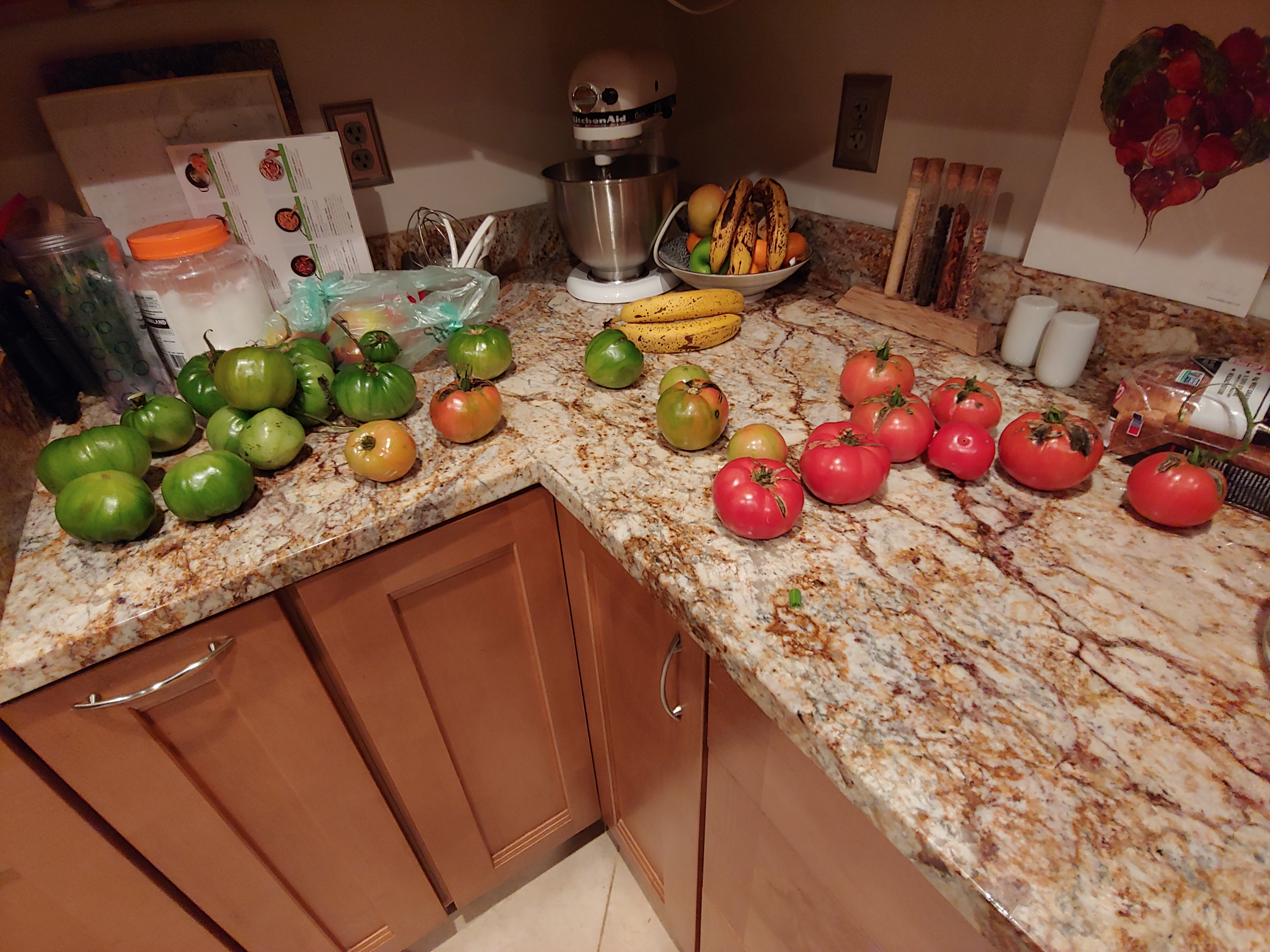 Picked tomatoes on counter