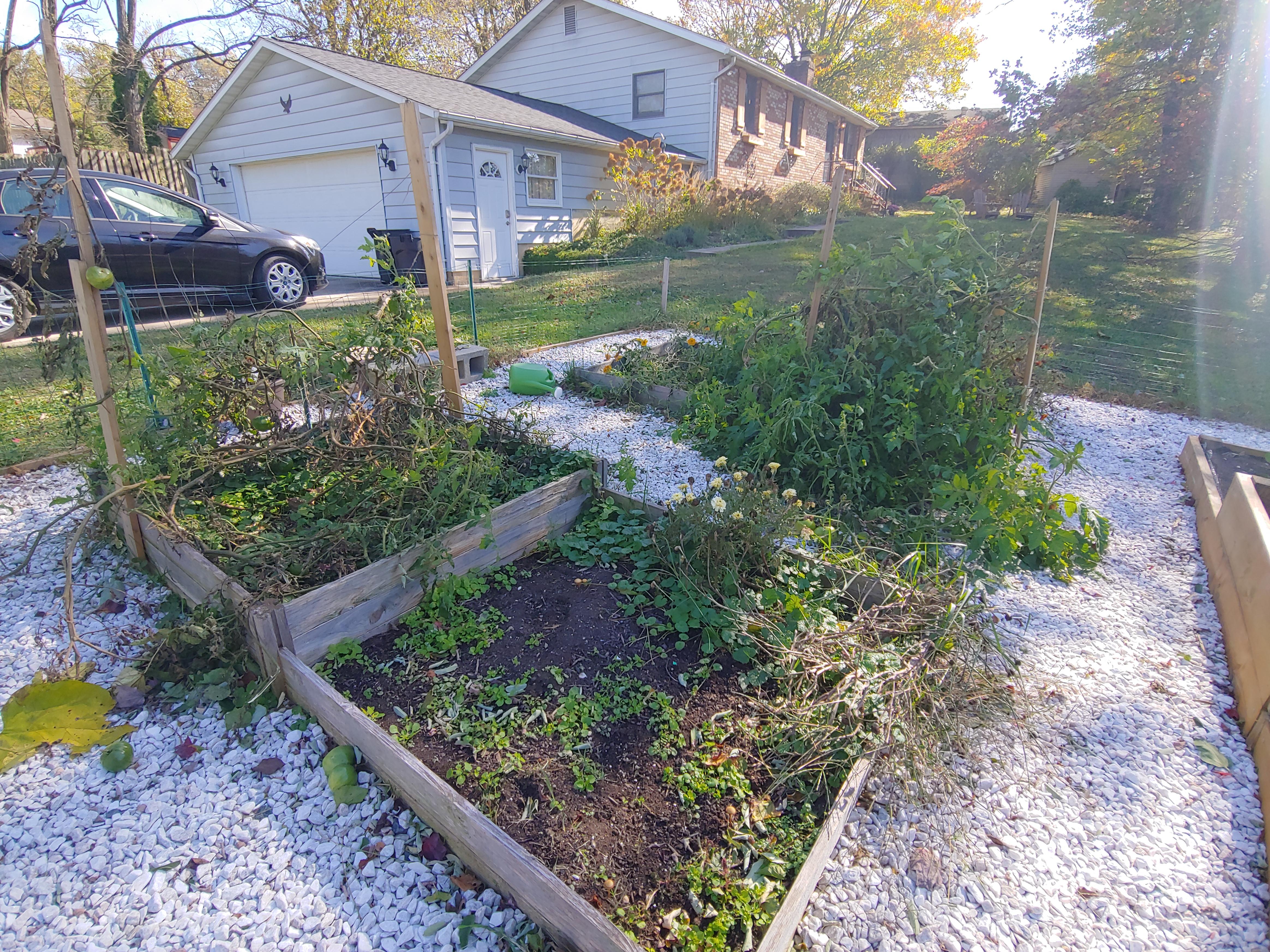 Tomato plants in raised bed garden