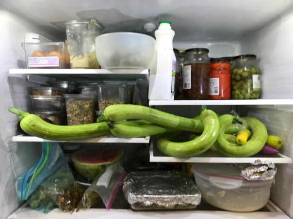 Medusa's refrigerator