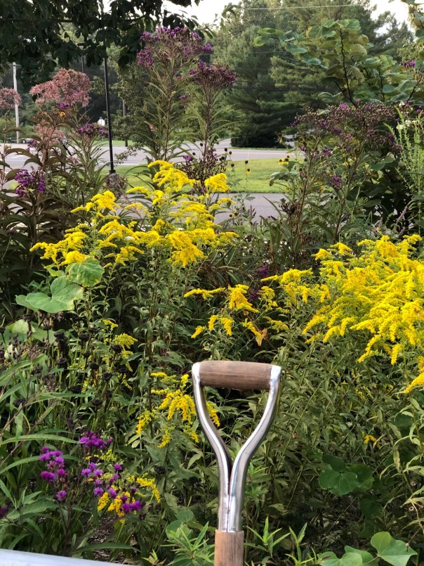 Photo of ornamental garden