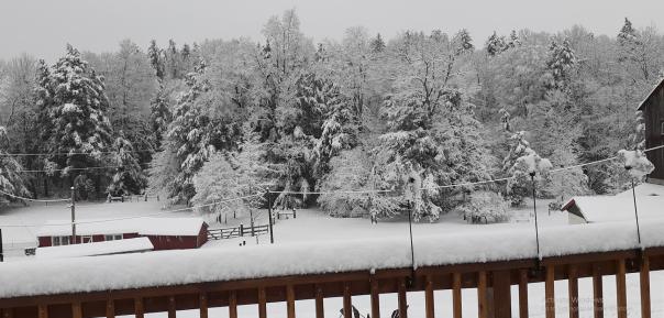 snowy landscape scene