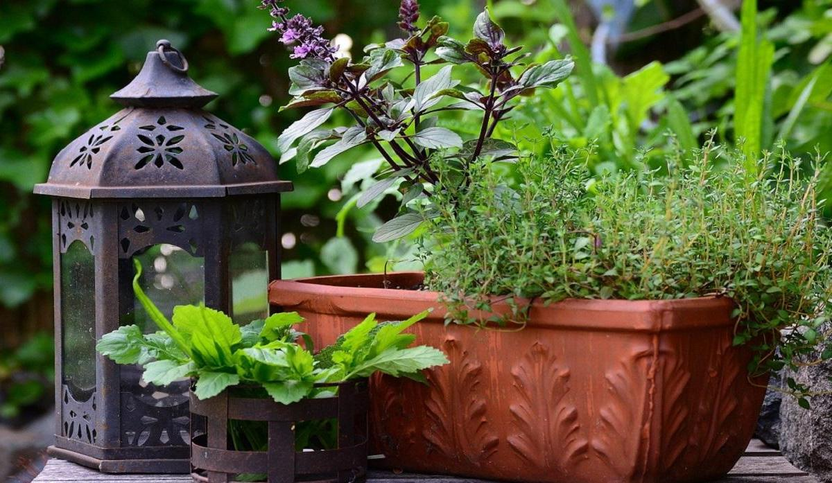 Small potted herb garden