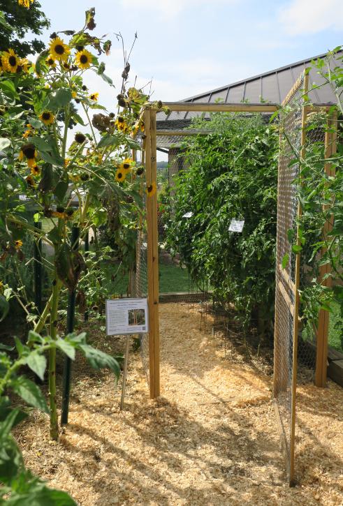 vegetable garden enclosure