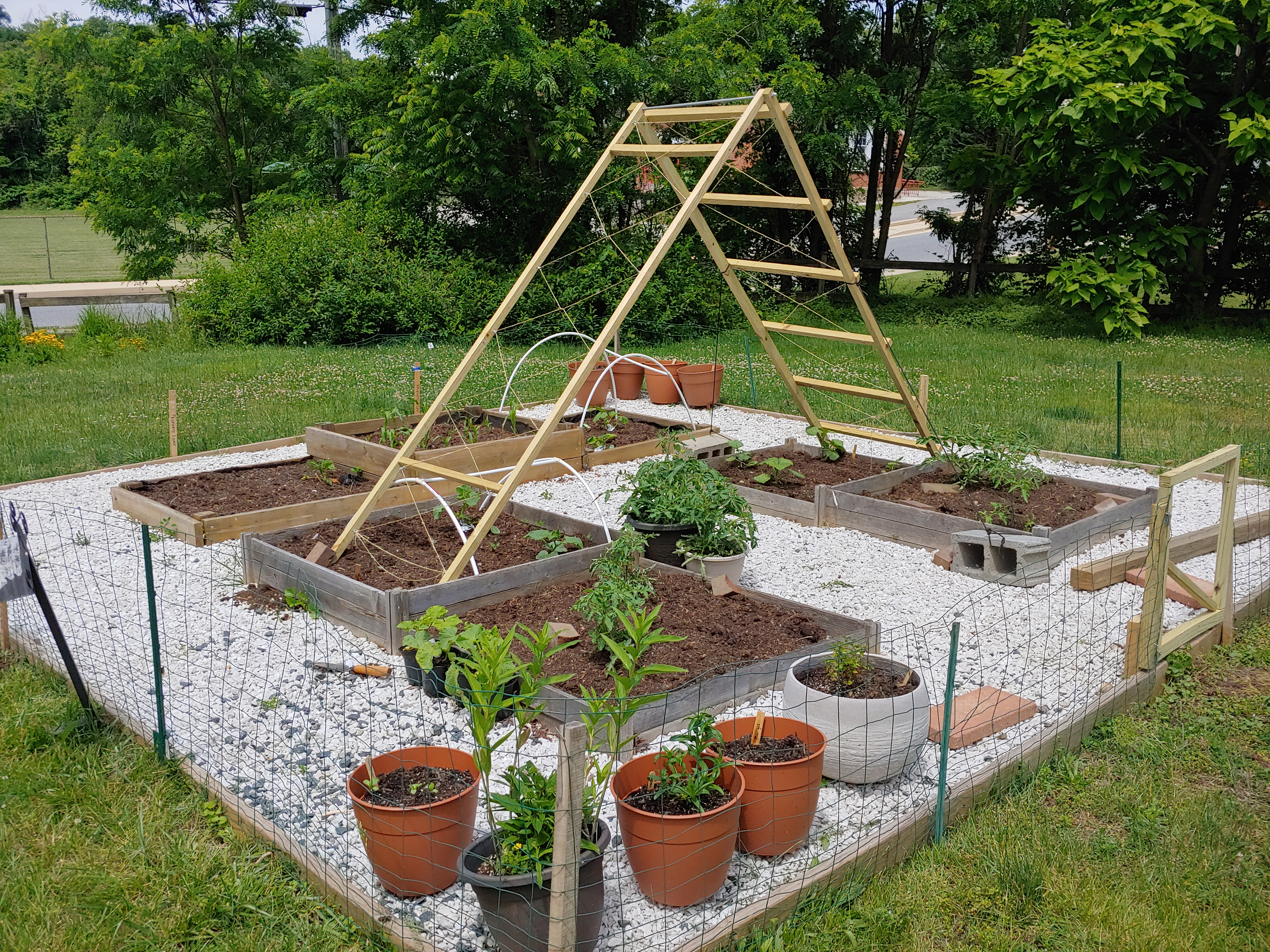 Trellis in the garden with young plants