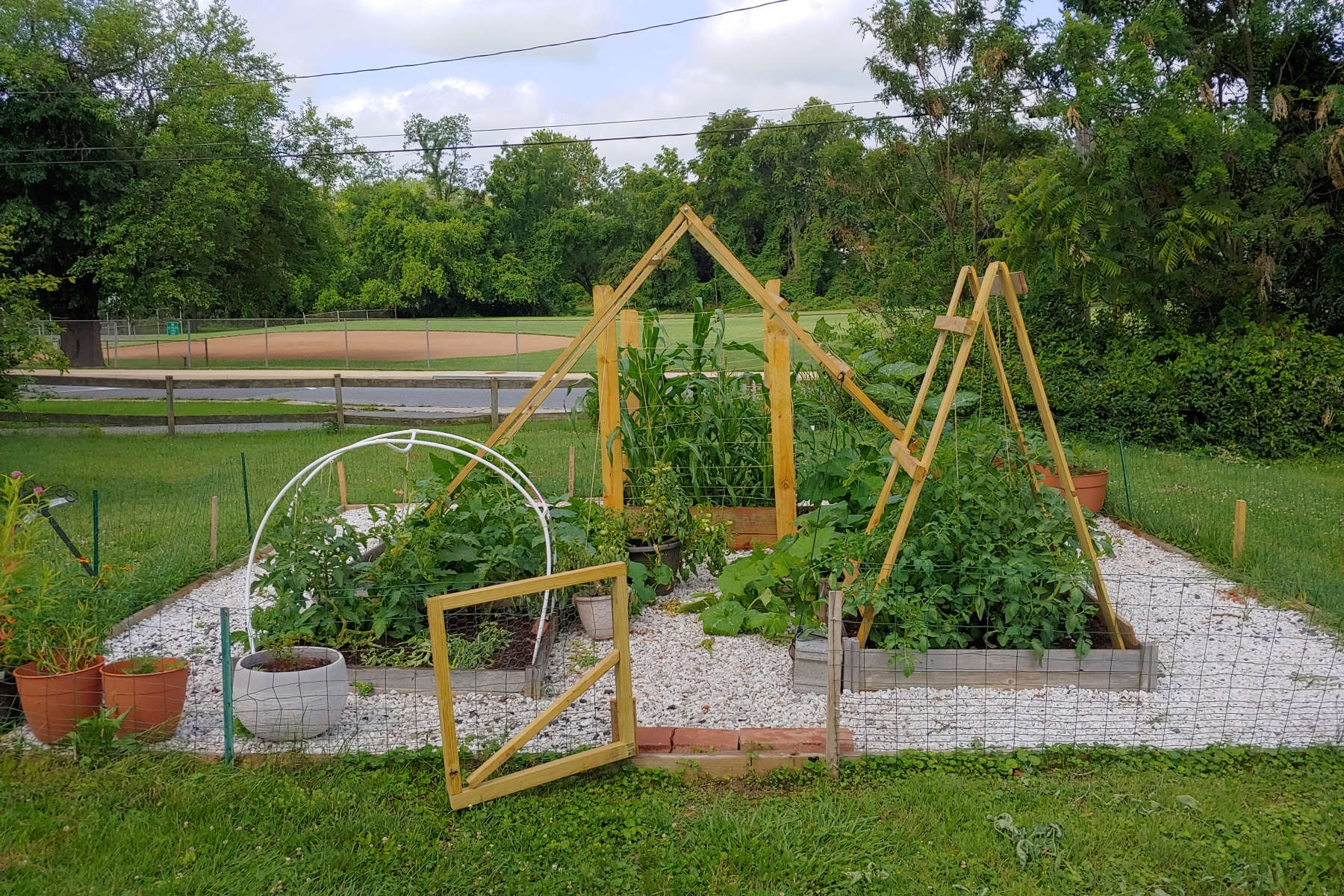 Vegetable garden with gate