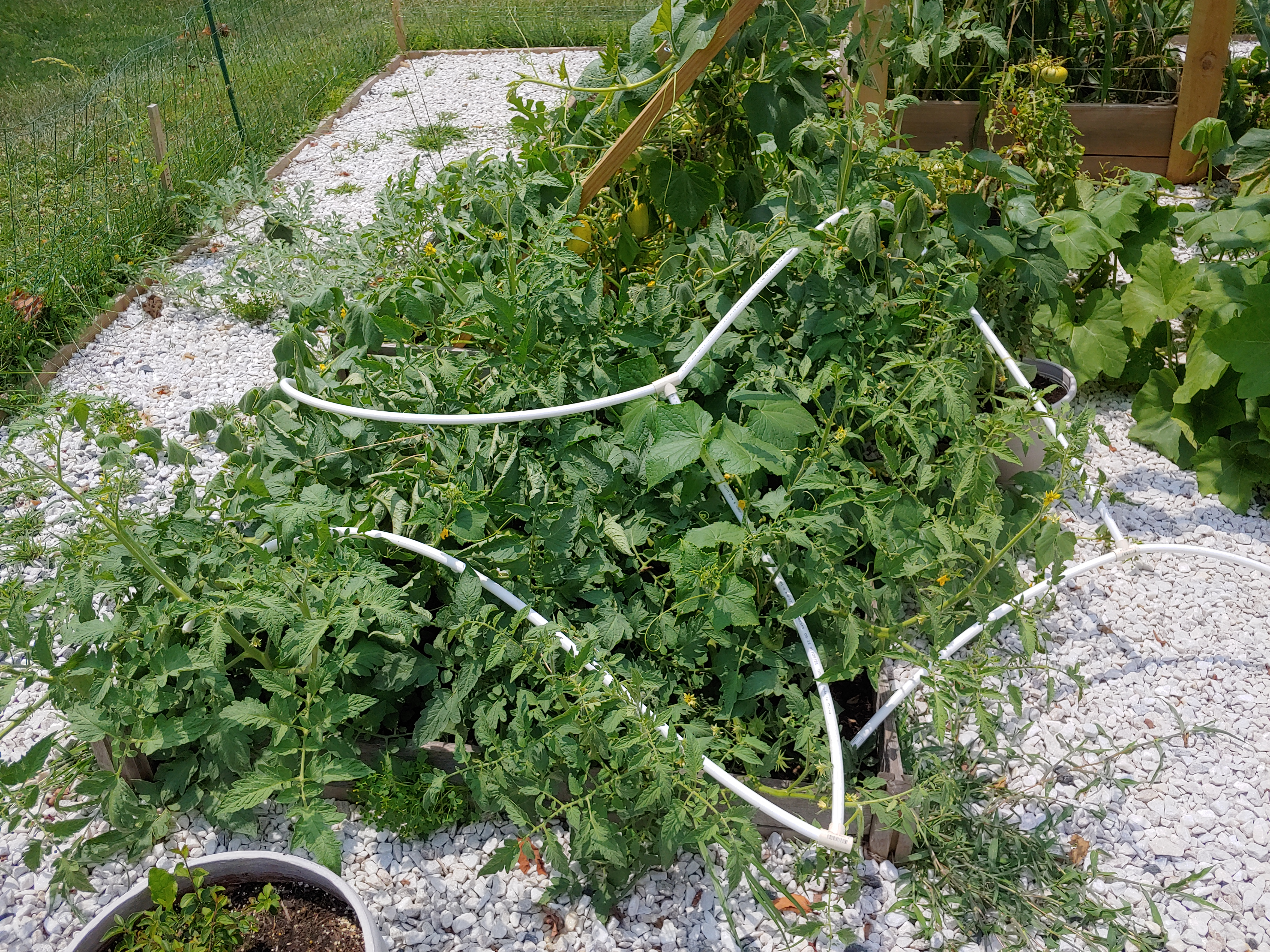 Collapsed tomato structure